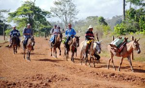 Zu Pferde Im ländlichen Nicaragua haben typische Fortbewegungsmittel vier Hufe (Fotos: Fabian Grieger)