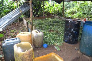 Kokalabor im Dschungel: Einkommen oder Verbrechen?